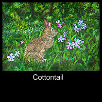 painting of cottontail rabbit (SOLD)