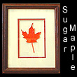 leather sculpture of autumn maple leaf (SOLD)