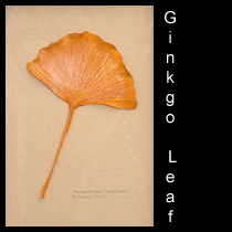 leather sculpture of autumn ginkgo leaf