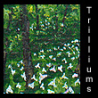 miniature landscape painting of trilliums (SOLD)