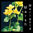 leather sculpture of marsh marigold flowers (SOLD)