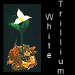 leather sculpture of white trillium flower (SOLD)