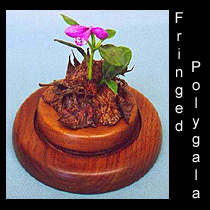 leather sculpture of fringed polygala flower